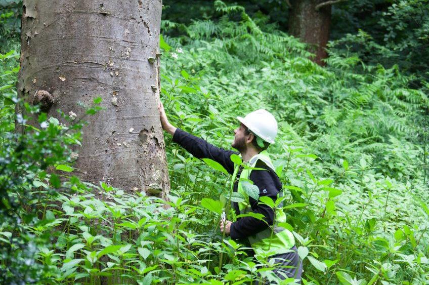 Urban Green Arboriculturist lands new role to launch RHS Bridgewater garden