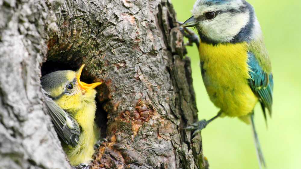 Do I Need a Nesting Bird Survey?