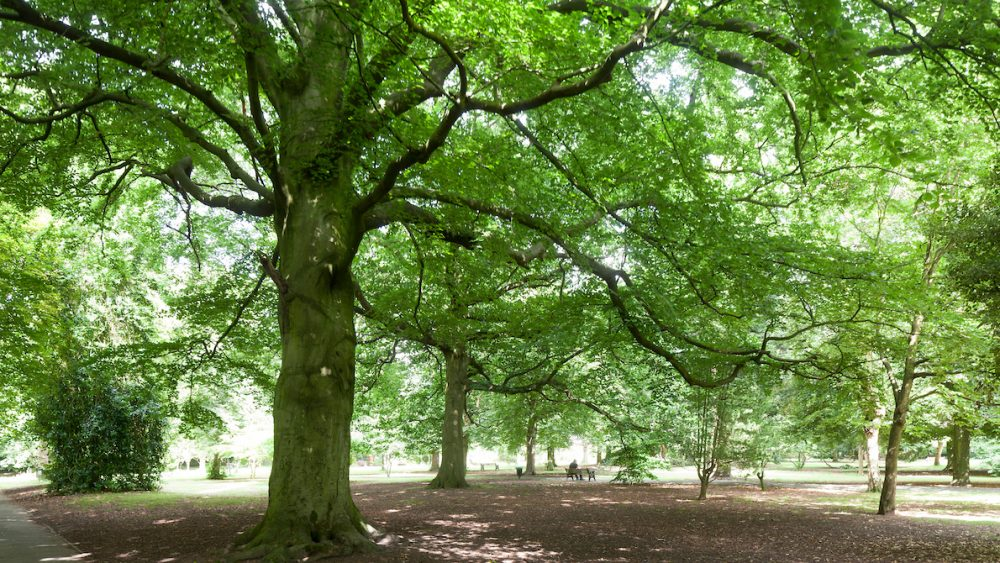 Trees – Your Risk and Responsibilities