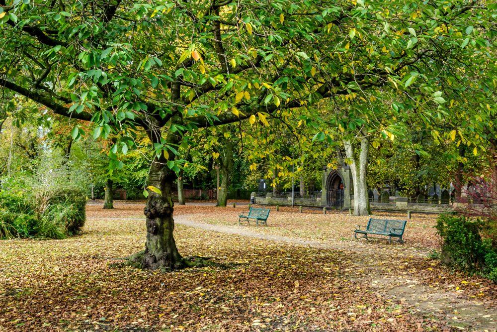 Salford Street Tree Audit