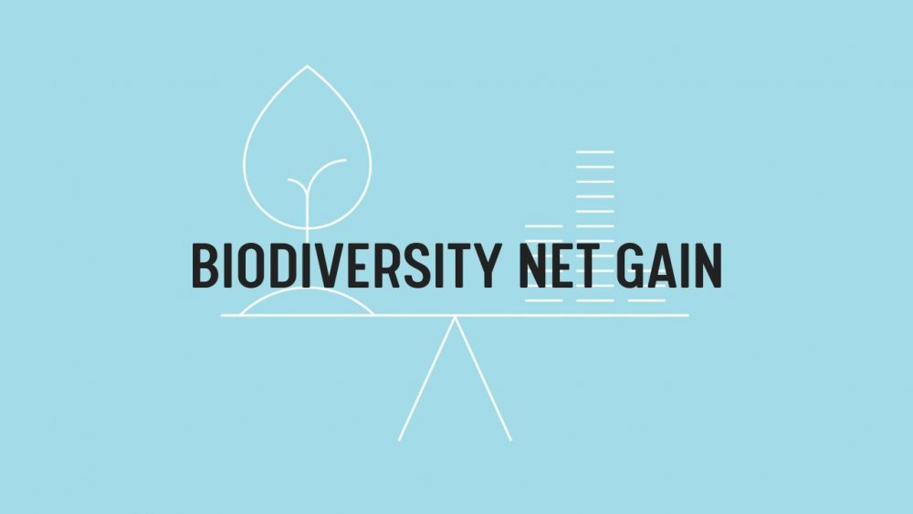 Achieving a 10% Biodiversity Net Gain on Developments