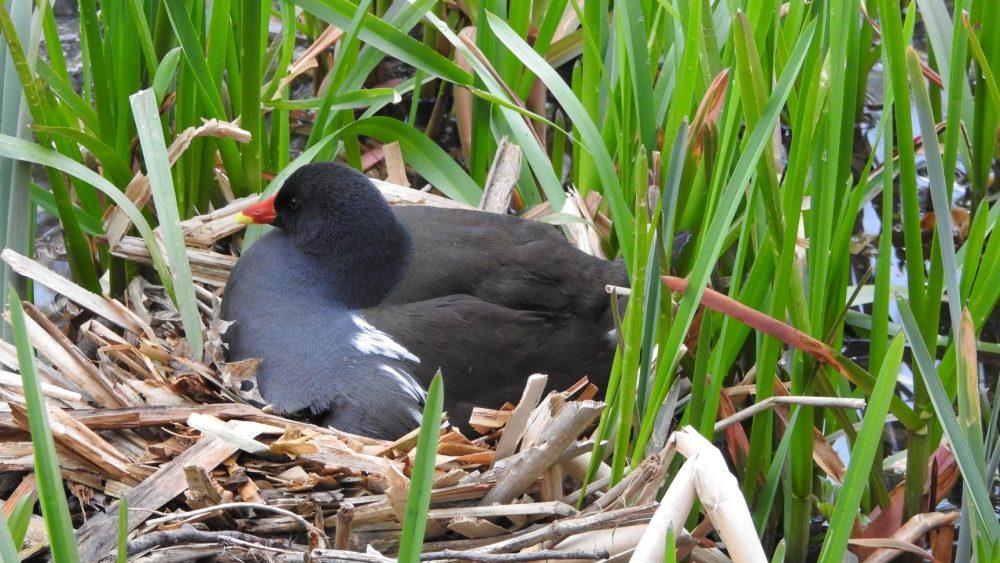 Breeding Bird Survey Guidance
